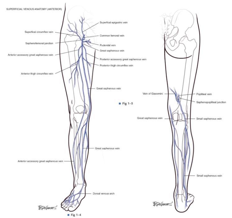 Atlas-of-Endovascular-Venous-Surgery_Chapter-1-6-768x723