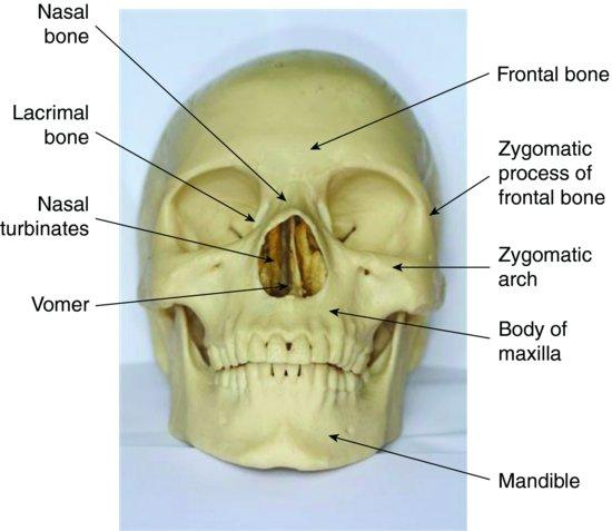 Skull-Anatomy-pocketdentistry.com_.jpg