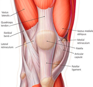 Quadriceps-Tendon-Anatomy-300x280.png