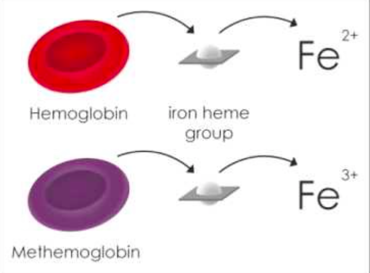 Methemoglobinemia-Patholophysiology.png